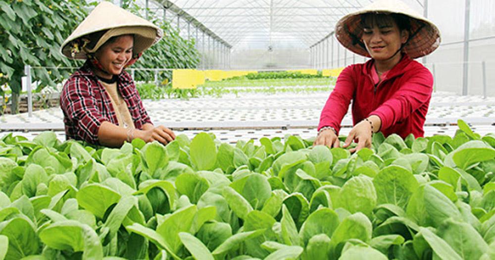 Nhu cầu trồng rau sạch ngày càng tăng cao